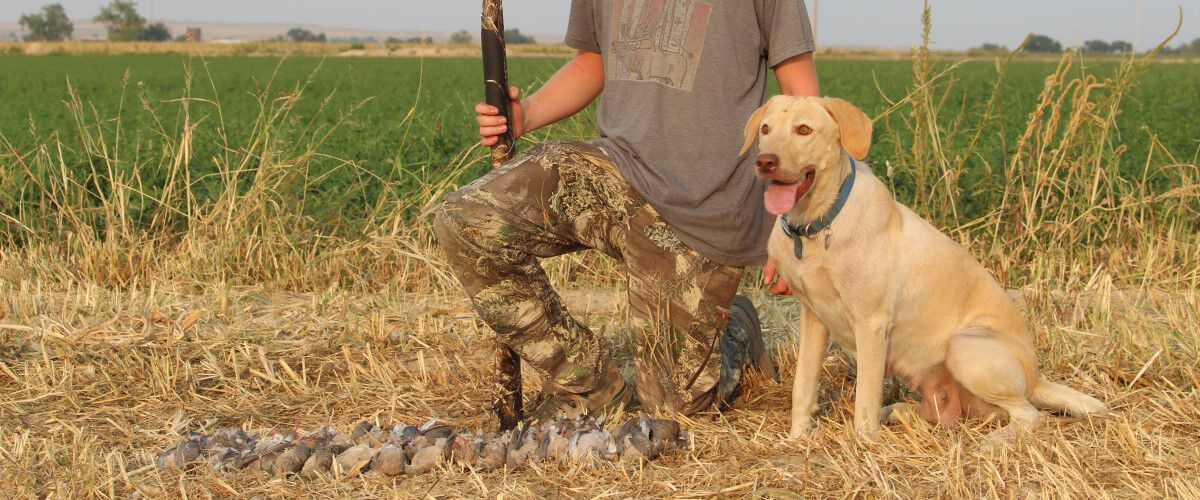 Hunting dog sitting with hunter in fron of dead mourning doves