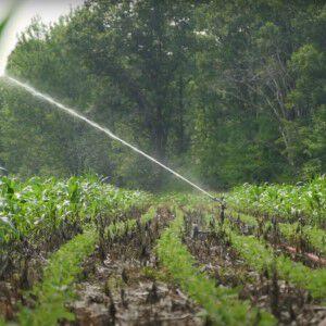 sprinkler watering a food plot