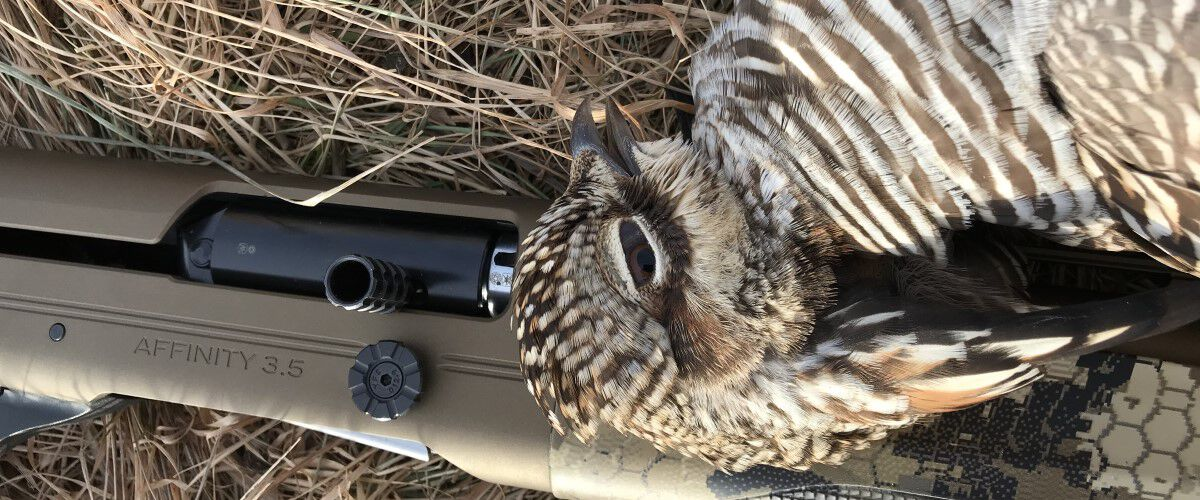 Dead grouse laying on a shotgun
