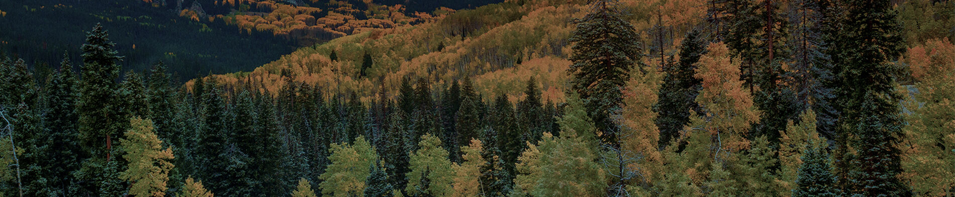 Multi-Colored Forest