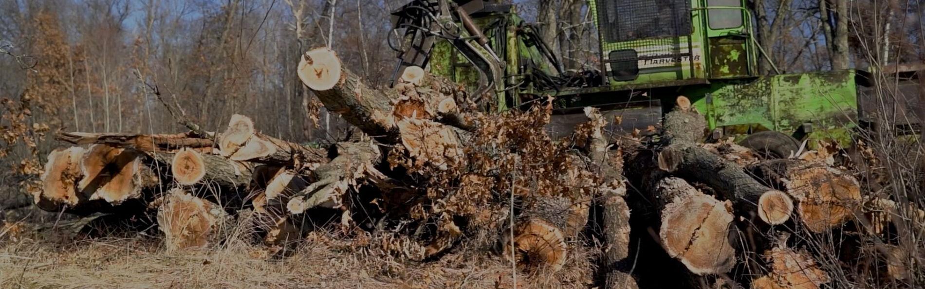 green harvester picking up cut tree trucks
